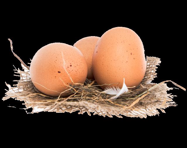 Eier vom Sonnenhof