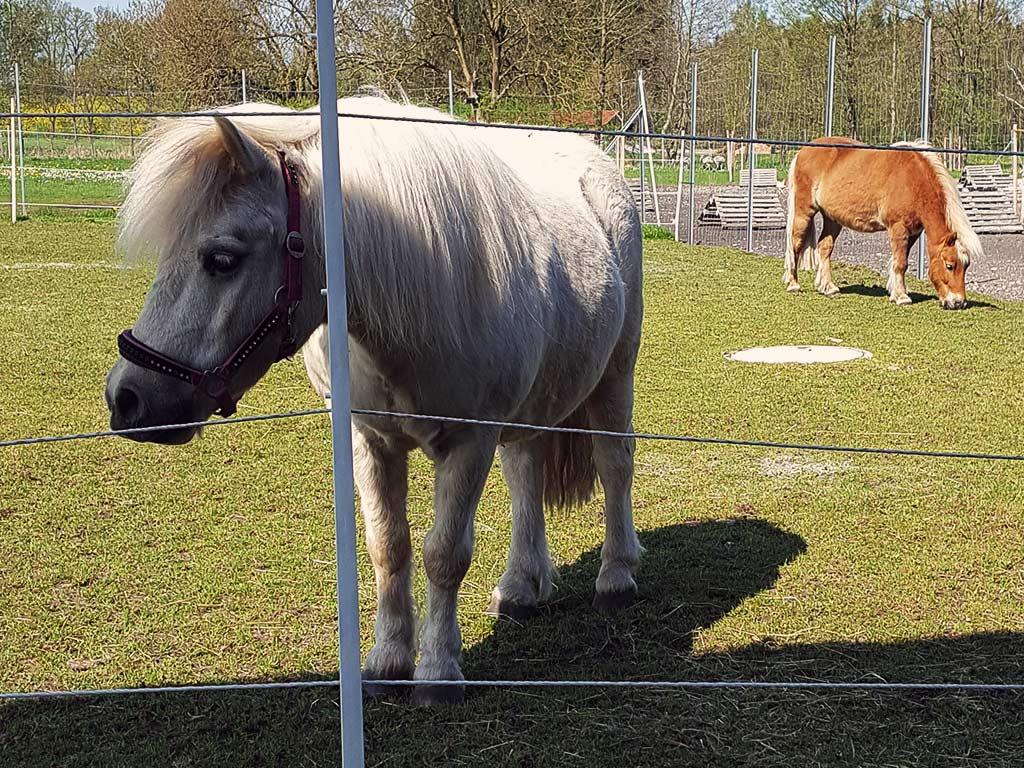 Sonnenhof Schreiber - unsere Ponnys